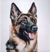 German Shepard Acrylic Pet Portrait by Donna Bobrowski.
